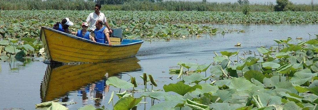 سفر وحشی های برزیل و شرق آسیا به گیلان ، مشاهده یک آبزی خطرناک در تالاب انزلی